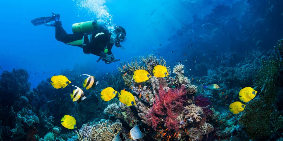 Scuba diving is a sport in which you can lose yourself to the beauty of the underwater world and escape gravity for a short time. Lah lah lah lah