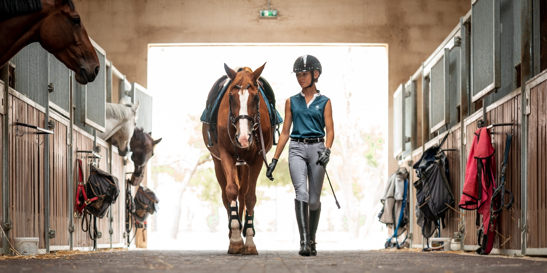The Ultimate Guide To Horse Riding
