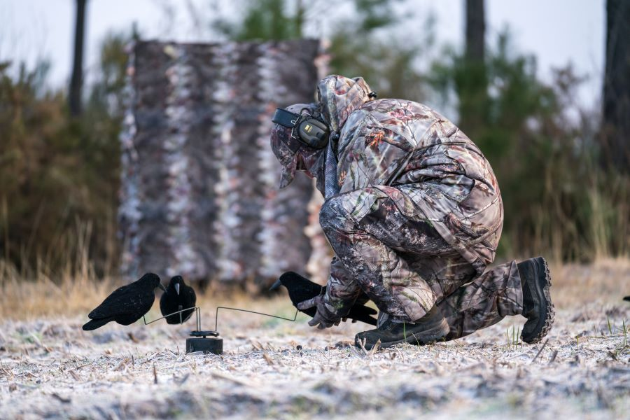 Decoying Crows
