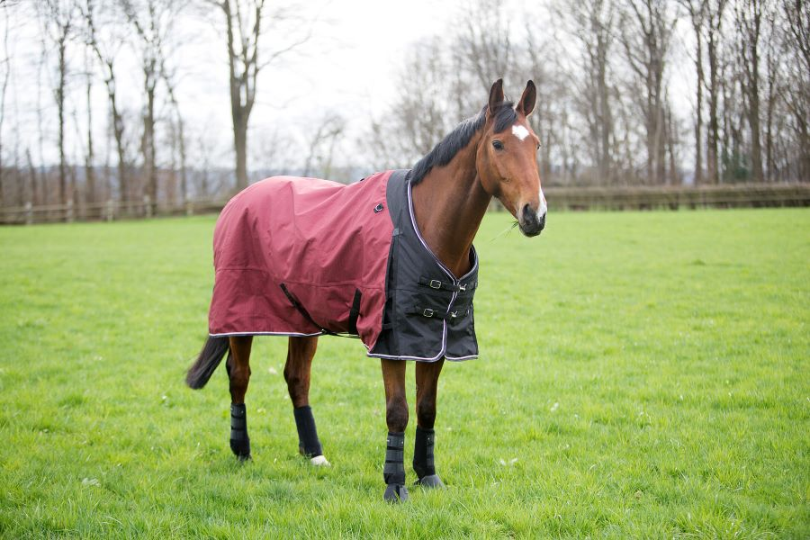 Does Your Horse Really Need To Wear A Rug?