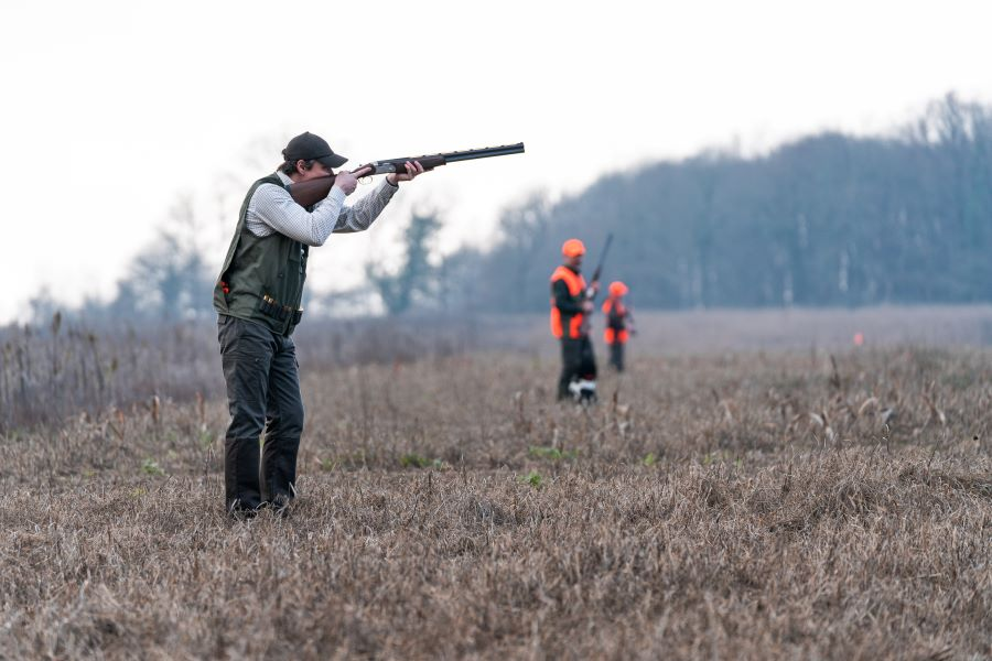 Thinking Of Going Driven Pheasant Shooting?